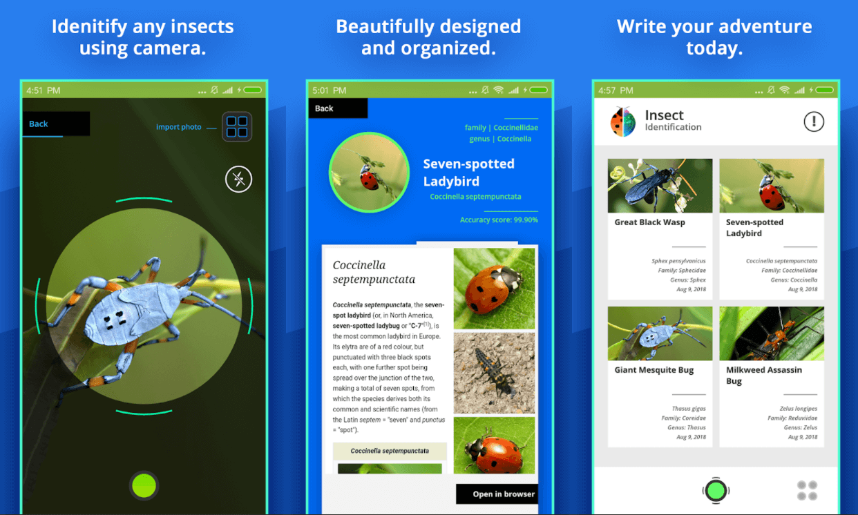 insect-identifier